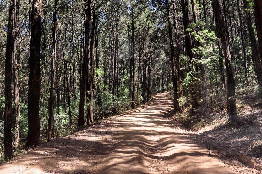 Menagesha National Forest
