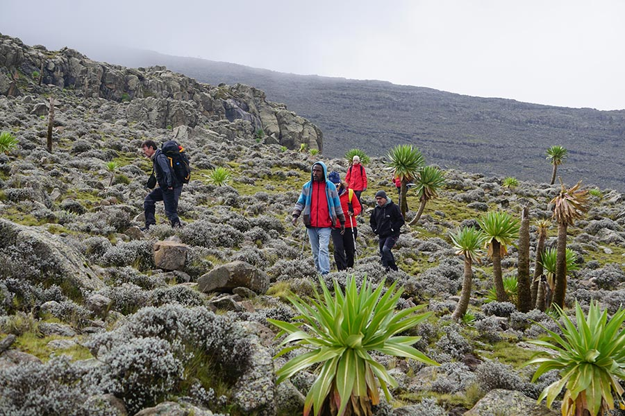 Tourists trekking in the Simien Mountains National Park